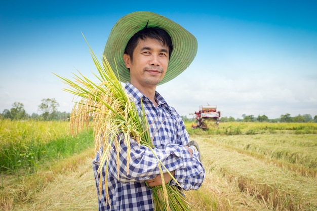 Asian young farmer happy harvest paddy rice in a green rice field