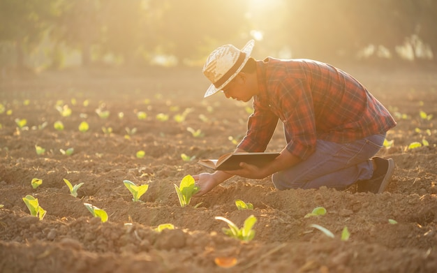 Asian young farmer working in the field of tobacco tree