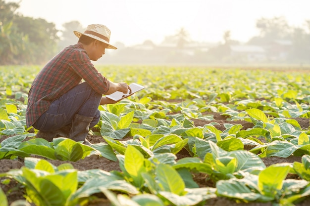 Asian young farmer working in the field