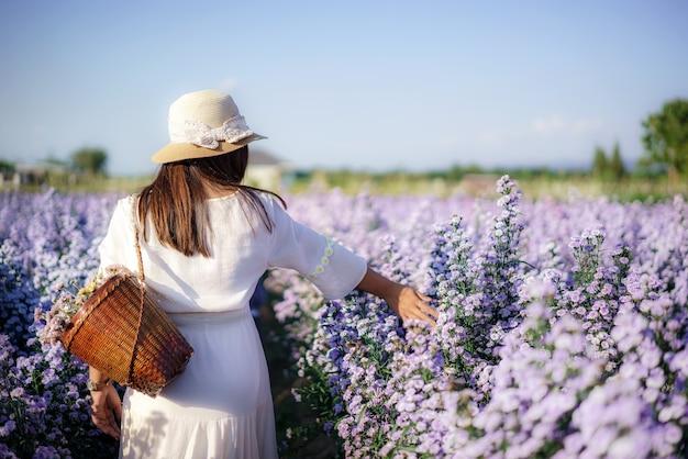 アジアの若い幸せな旅行者アジアの女性は、タイのチェンマイで冬の季節に庭のマーガレットアスターの花畑を観光します。