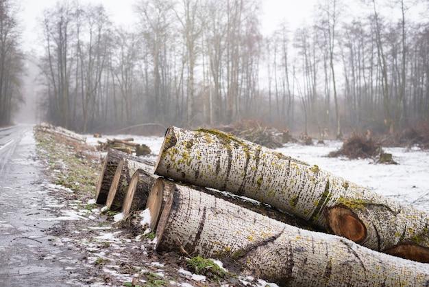 森林地帯の道路近くのポプラの木の幹