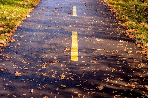 Asphalt bicycle path in autumn, yellow stripe