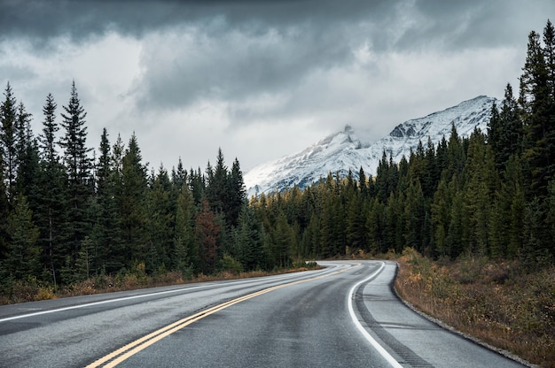 バンフ国立公園の憂鬱な日に秋の森のアスファルト道路