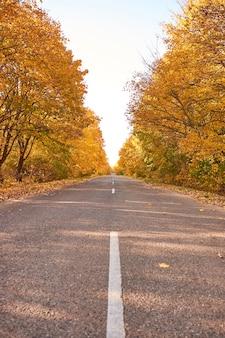 黄色い秋の木々の間のアスファルト道路