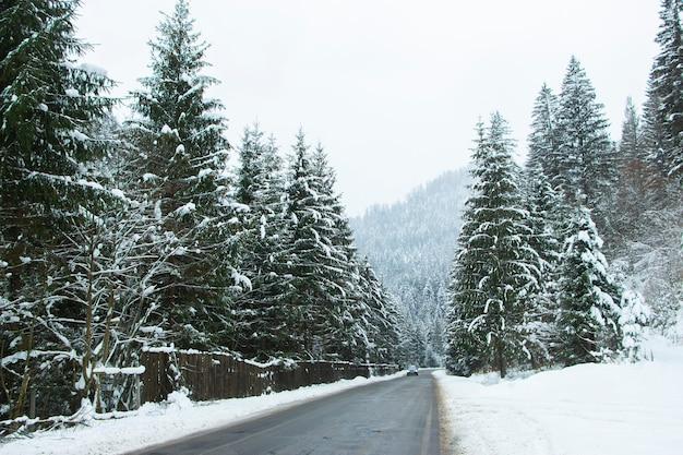 雪に覆われた森の間のアスファルト道路。高山の森の道