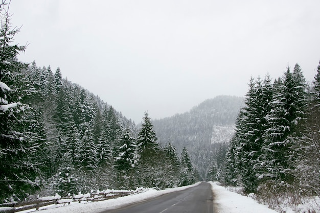 눈 덮인 숲 사이의 아스팔트 도로