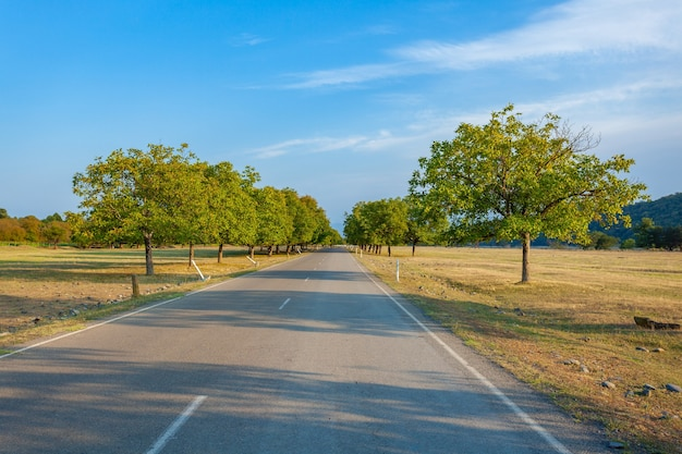 カヘティ地域のアスファルト道路、ジョージア州への旅行