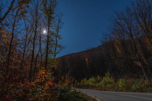 月明かりに照らされた夜の秋の森のアスファルト道路