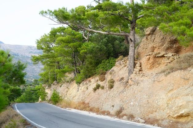 Асфальтовая дорога в средиземноморских горах и соснах