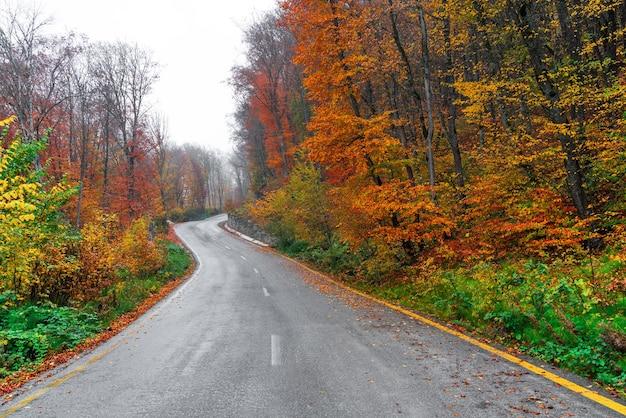 Асфальтовая дорога, проходящая через красочный осенний лес