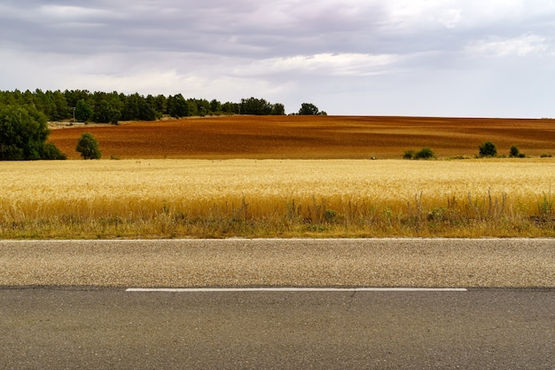 Asphalt road in the rural countryside with cereal plantation.
