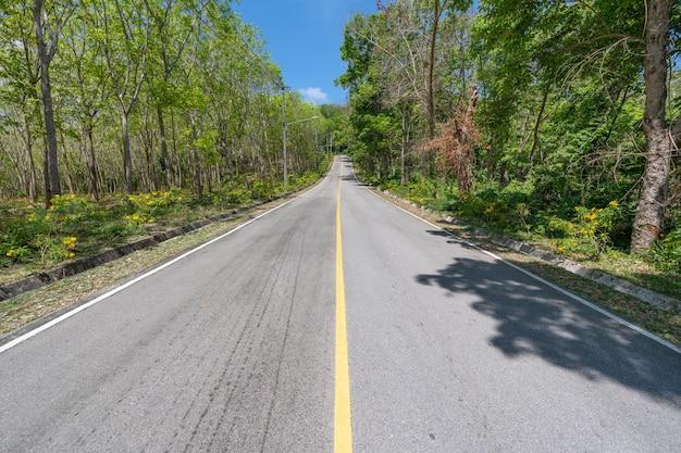 The asphalt road through the rubber trees plantation in summer season beautiful blue sky background at phuket thailand.