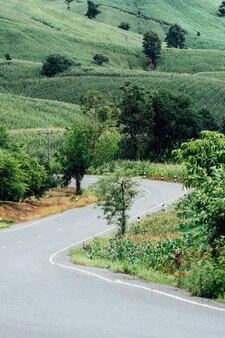 深い森を抜けるアスファルト道路。選択的な焦点、自然