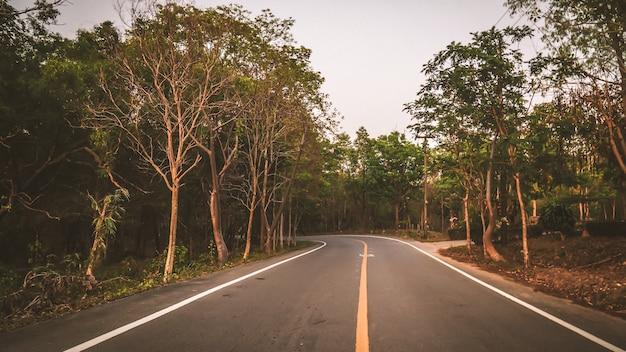 アスファルト道路が森の中で左折