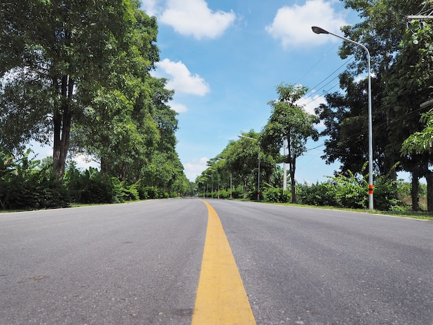 Asphalt road with green trees beside