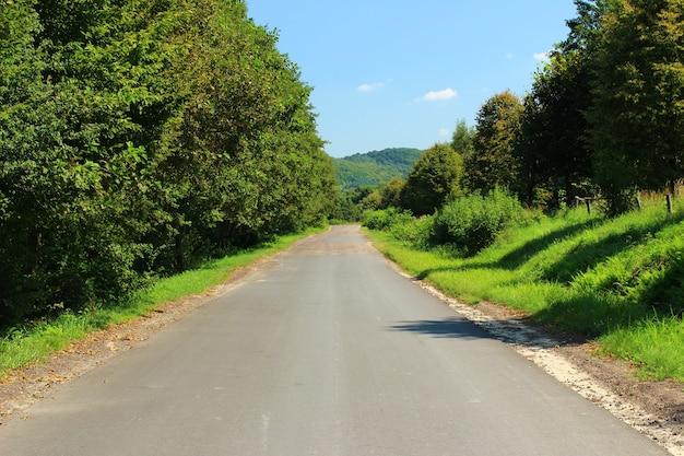 アスファルト道路と夏の自然