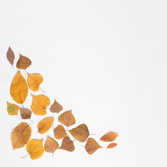 Assorted leaves lying in corner