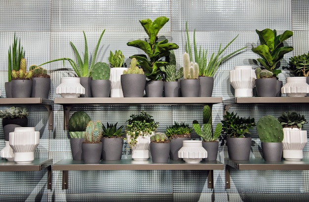 Assorted succulents growing in monochromatic grey flowerpots of different shapes and sizes displayed on shelves in front of textured tiles
