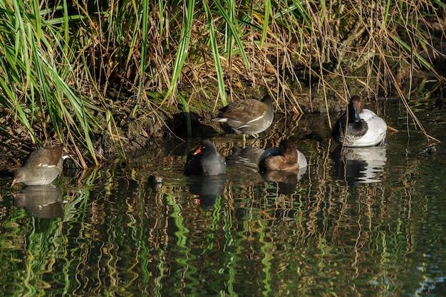 Ассорти из водоплавающих птиц в лондонском центре водно-болотных угодий