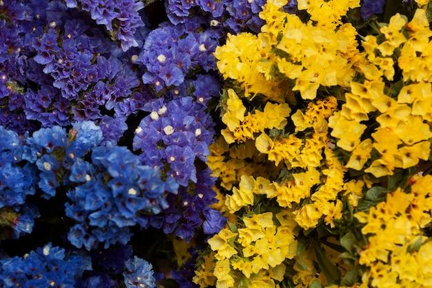 Assortment of beautiful flowers background