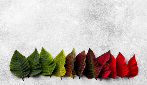 Assortimento di foglie colorate con copia spazio