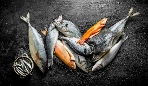 Assortment of different fresh fish on the fishing net on black rustic table