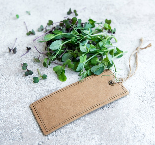 Assortment of micro greens on concrete background healthy lifestyle