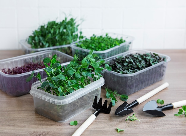 Assortment of micro greens on wooden table. healthy lifestyle