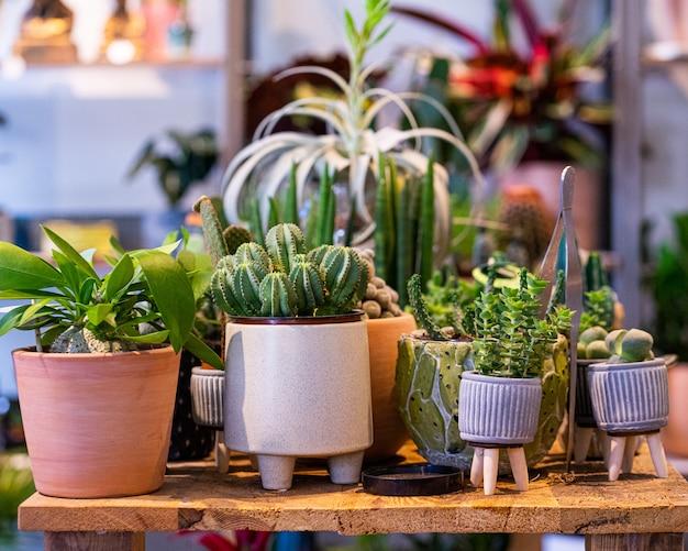 식물 상점 온실의 냄비에 선인장의 구색