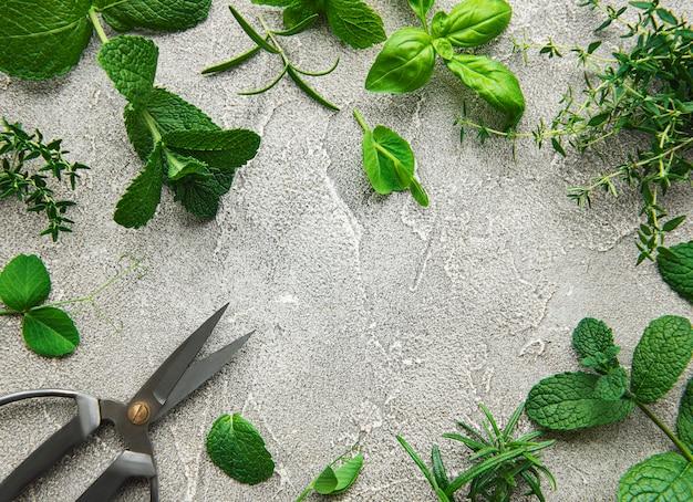 Ассортимент свежих ароматных трав сверху на сером фоне бетона. мята, тимьян, базилик, розмарин, вид сверху.