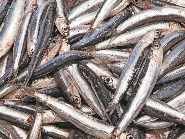 新鮮な魚の品揃え