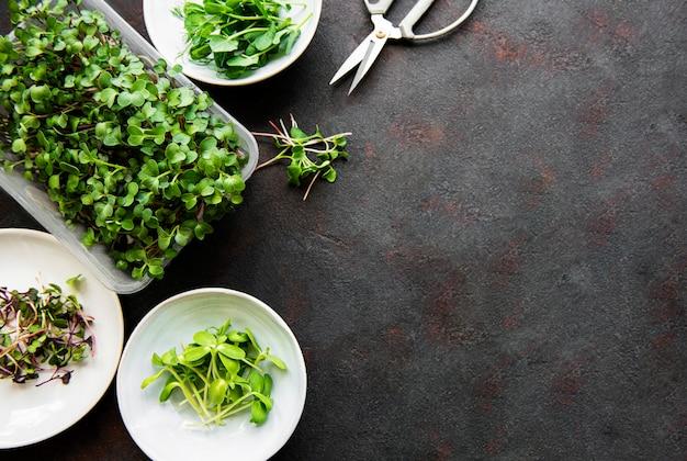검은 배경, 복사 공간, 평면도에서 마이크로 채소의 구색.