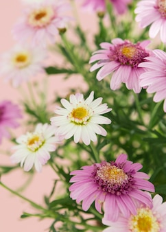 Assortment with colorful spring flowers