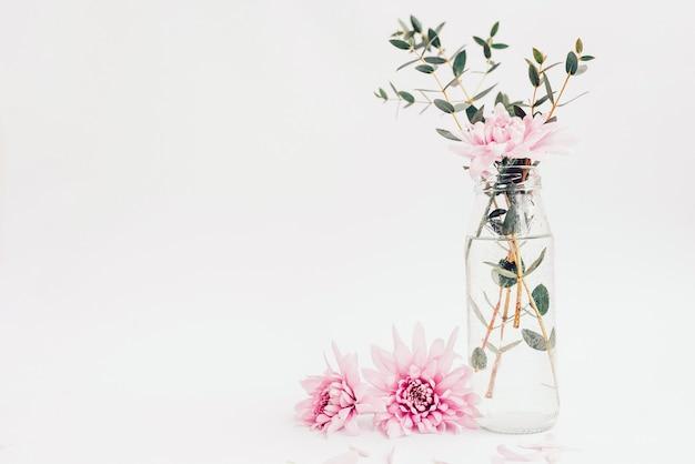 Цветы астры и зеленое растение в вазе