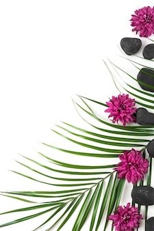 Aster flowers; black spa stone and palm leaf over white background