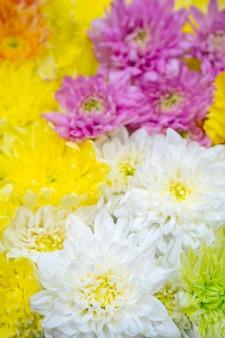 Хризантемы - цветущие растения рода хризантемы в семействе asteraceae.