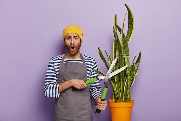 大きな鉢植えのヘビの植物でポーズをとる驚いた庭師