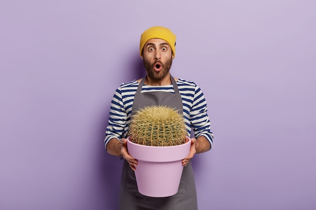 Astonished male florist holds big cactus planted in pot, shocked with size of his indoor plant