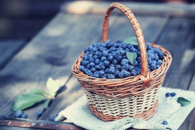 바구니에 담긴 수렴성 치유 과일 prunus spinosa