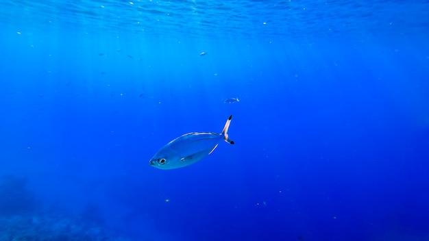 На глубине моря, под толщей воды, плавают красивые рыбки, освещенные солнечными лучами света.