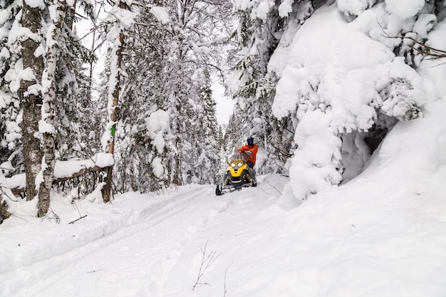 Спортсмен на снегоходе движется в зимнем лесу