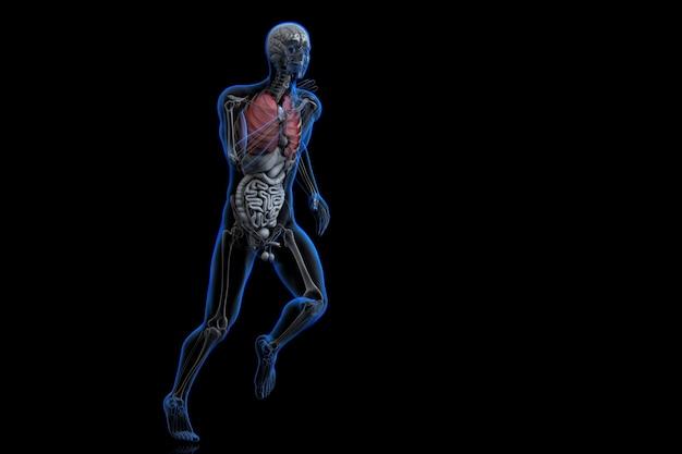強調表示された赤い肺を持つ運動選手。 3dイラスト。クリッピングパスが含まれています