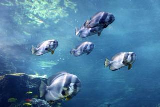 Atlanta aquarium, water