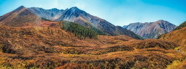 雰囲気のある秋の山の風景。針葉樹林の端と薄霧の中の山々のある広いパノラマ風景。アルタイ山脈。
