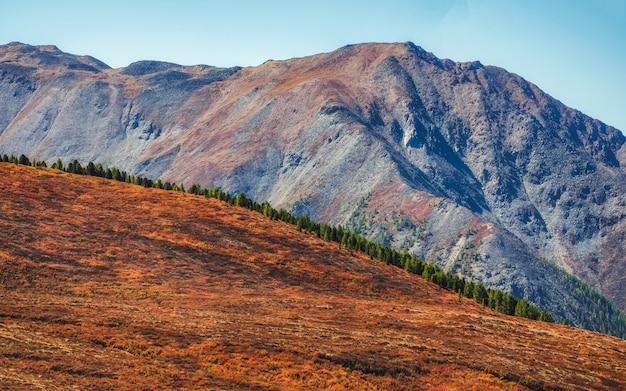 雰囲気のある秋の山の風景。針葉樹林の端と薄霧の中の山々のパノラマ風景。アルタイ山脈。