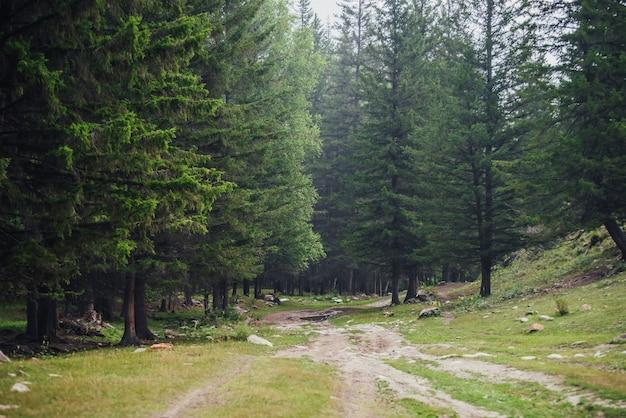 山のもみの間の未舗装の道路と大気の森の風景。