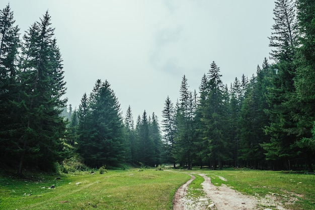 Atmospheric forest scenery with dirt road among firs in mountains.