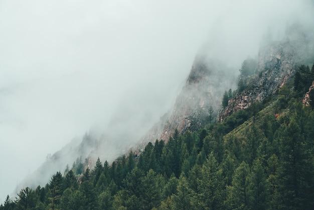 Атмосферный призрачный темный лес в густом тумане среди больших скал