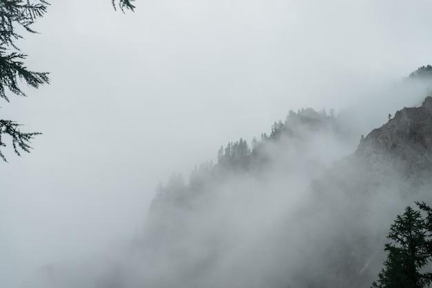 Атмосферный призрачный темный лес в густом тумане