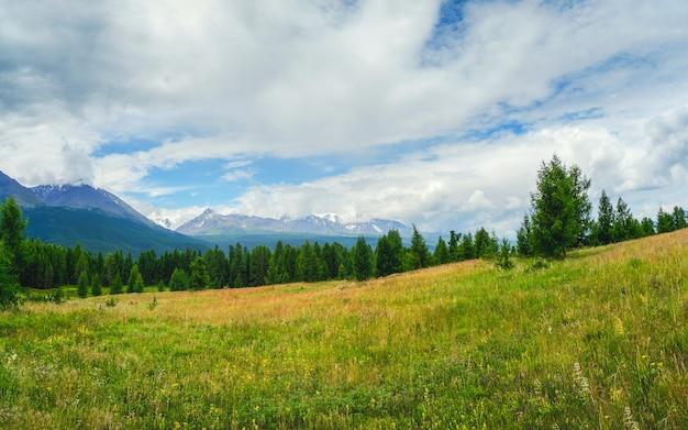 Атмосферный зеленый лесной пейзаж. минималистичный панорамный пейзаж с опушкой хвойного леса и скал в легком тумане. горный альпийский лесной массив.